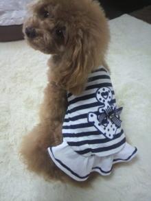 愛犬鈴ちゃん~トイプードル☆ライフスタイル~-2012050913050000.jpg