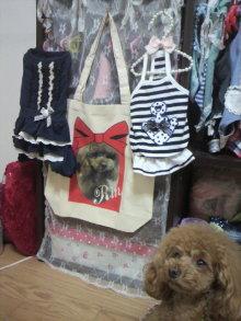 愛犬鈴ちゃん~トイプードル☆ライフスタイル~-2012051117500000.jpg