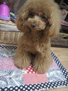 愛犬鈴ちゃん~トイプードル☆ライフスタイル~-2012051117500002.jpg