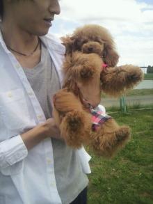 愛犬鈴ちゃん~トイプードル☆ライフスタイル~-2012051212170001.jpg