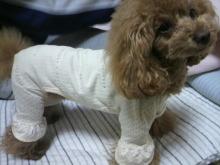 愛犬鈴ちゃん~トイプードル☆ライフスタイル~-2012051223290001.jpg