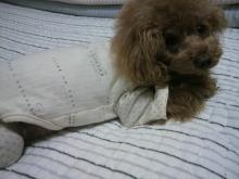愛犬鈴ちゃん~トイプードル☆ライフスタイル~-2012051223290000.jpg