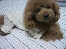 愛犬鈴ちゃん~トイプードル☆ライフスタイル~-2012051223280001.jpg