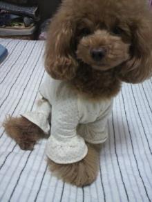 愛犬鈴ちゃん~トイプードル☆ライフスタイル~-2012051223280000.jpg