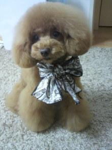 愛犬鈴ちゃん~トイプードル☆ライフスタイル~-2012051315540001.jpg