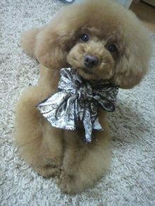 愛犬鈴ちゃん~トイプードル☆ライフスタイル~-2012051315550001.jpg
