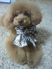 愛犬鈴ちゃん~トイプードル☆ライフスタイル~-2012051315560001.jpg