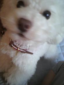 愛犬鈴ちゃん~トイプードル☆ライフスタイル~-2012051708090000.jpg
