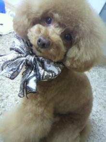 愛犬鈴ちゃん~トイプードル☆ライフスタイル~-2012051315580001.jpg