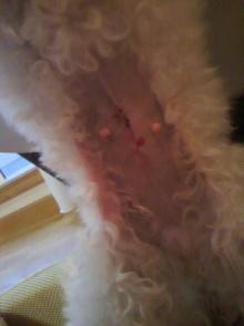 愛犬鈴ちゃん~トイプードル☆ライフスタイル~-2012051818320000.jpg