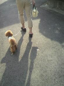 愛犬鈴ちゃん~トイプードル☆ライフスタイル~-2012051915520000.jpg