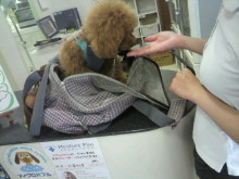 愛犬鈴ちゃん~トイプードル☆ライフスタイル~-2012052011320001.jpg