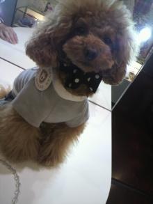 愛犬鈴ちゃん~トイプードル☆ライフスタイル~-2012052213380000.jpg