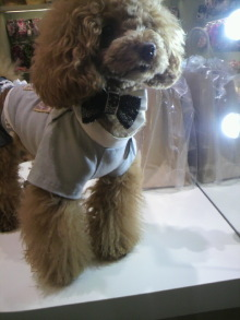 愛犬鈴ちゃん~トイプードル☆ライフスタイル~-2012052213480000.jpg