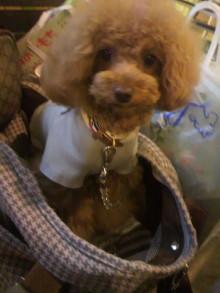 愛犬鈴ちゃん~トイプードル☆ライフスタイル~-2012052214440002.jpg