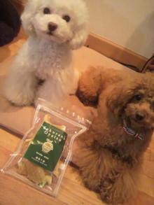 愛犬鈴ちゃん~トイプードル☆ライフスタイル~-2012052218580000.jpg