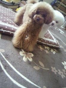 愛犬鈴ちゃん~トイプードル☆ライフスタイル~-2012052508210001.jpg