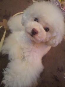 愛犬鈴ちゃん~トイプードル☆ライフスタイル~-2012052319430002.jpg