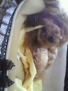 愛犬鈴ちゃん~トイプードル☆ライフスタイル~-2012052511050005.jpg