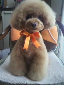 愛犬鈴ちゃん~トイプードル☆ライフスタイル~-2012052514380001.jpg