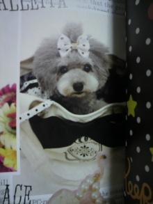 愛犬鈴ちゃん~トイプードル☆ライフスタイル~-2012012622430000.jpg