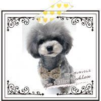 愛犬鈴ちゃん~トイプードル☆ライフスタイル~-25399355_mb.jpg