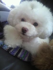 愛犬鈴ちゃん~トイプードル☆ライフスタイル~-2012052607250002.jpg
