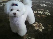 愛犬鈴ちゃん~トイプードル☆ライフスタイル~-2012052608580002.jpg