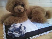 愛犬鈴ちゃん~トイプードル☆ライフスタイル~-2012052614340000.jpg