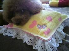 愛犬鈴ちゃん~トイプードル☆ライフスタイル~-2012052615390000.jpg