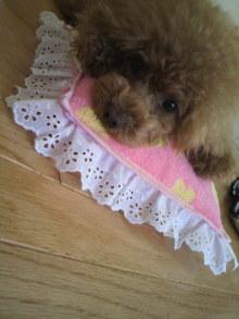 愛犬鈴ちゃん~トイプードル☆ライフスタイル~-2012052615370000.jpg