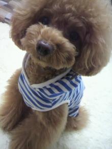 愛犬鈴ちゃん~トイプードル☆ライフスタイル~-2012052811290000.jpg