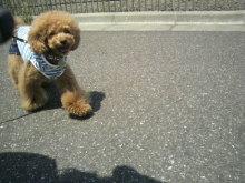 愛犬鈴ちゃん~トイプードル☆ライフスタイル~-2012052812060001.jpg