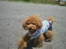 愛犬鈴ちゃん~トイプードル☆ライフスタイル~-2012052812110002.jpg