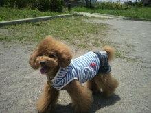 愛犬鈴ちゃん~トイプードル☆ライフスタイル~-2012052812140005.jpg