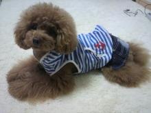 愛犬鈴ちゃん~トイプードル☆ライフスタイル~-2012052811280001.jpg