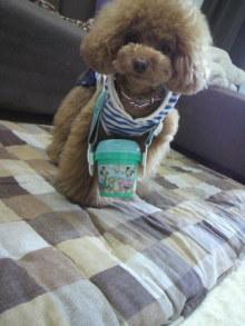 愛犬鈴ちゃん~トイプードル☆ライフスタイル~-2012052811540000.jpg