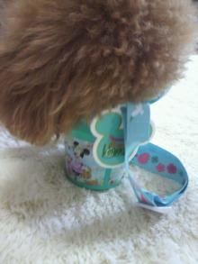 愛犬鈴ちゃん~トイプードル☆ライフスタイル~-2012052811520000.jpg