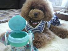 愛犬鈴ちゃん~トイプードル☆ライフスタイル~-2012052811510000.jpg