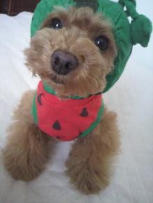 愛犬鈴ちゃん~トイプードル☆ライフスタイル~-2012052915580001.jpg