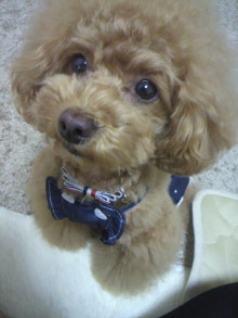 愛犬鈴ちゃん~トイプードル☆ライフスタイル~-2012053010230003.jpg