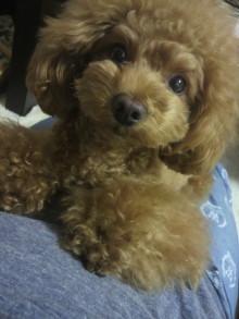 愛犬鈴ちゃん~トイプードル☆ライフスタイル~-2012053119430000.jpg