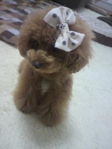 愛犬鈴ちゃん~トイプードル☆ライフスタイル~-2012060110490002.jpg