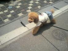 愛犬鈴ちゃん~トイプードル☆ライフスタイル~-2012060111460000.jpg