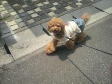 愛犬鈴ちゃん~トイプードル☆ライフスタイル~-2012060111460001.jpg
