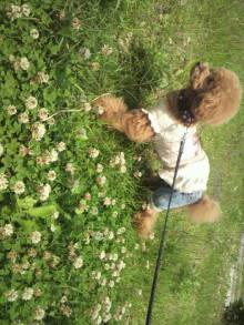 愛犬鈴ちゃん~トイプードル☆ライフスタイル~-2012060111370001.jpg