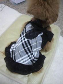 愛犬鈴ちゃん~トイプードル☆ライフスタイル~-2012060112570000.jpg