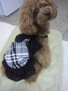 愛犬鈴ちゃん~トイプードル☆ライフスタイル~-2012060112580001.jpg