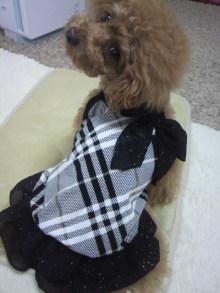 愛犬鈴ちゃん~トイプードル☆ライフスタイル~-2012060112590000.jpg
