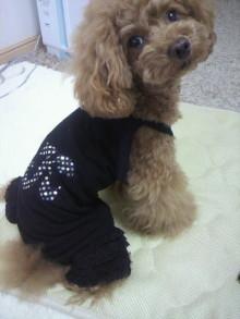 愛犬鈴ちゃん~トイプードル☆ライフスタイル~-2012060113000000.jpg